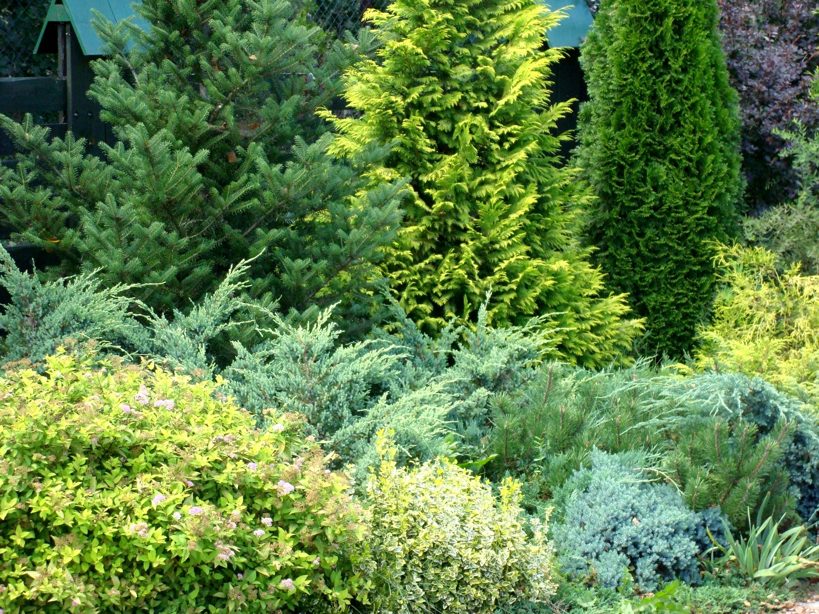 Sunshine Ligustrum Reviews